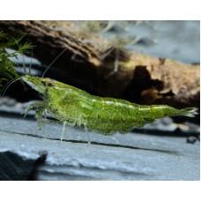 Креветка зеленый - нефрит жаде