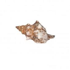 Морская раковина РК-20 14*9*6.5см