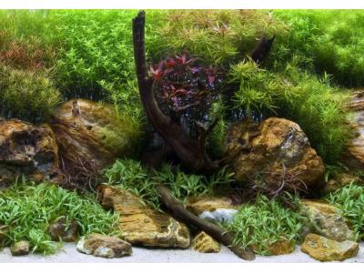 Фон двухсторонний Barbus Водный сад-Яркие камни, выс 45см