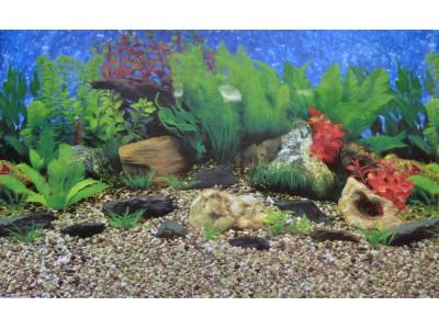 Фон двухсторонний Barbus Гаваи - Коралловый риф, выс 60см