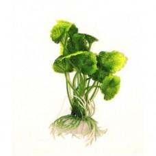 Гидрокотила зелёная 10см