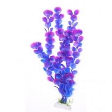 Вашингтония фиолетовая 30см