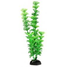 Амбулия зелёная 30см