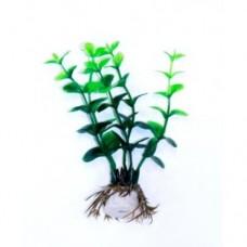 Кардамин зелёный 10см