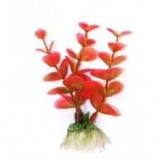 Лобелия красно-зелёная 10см