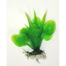 Анубиас зелёный 10см