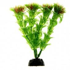 Гигрофила зелёная 20см
